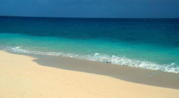 """Dia Mundial dos Oceanos 2008: um """"presente"""" Malla"""