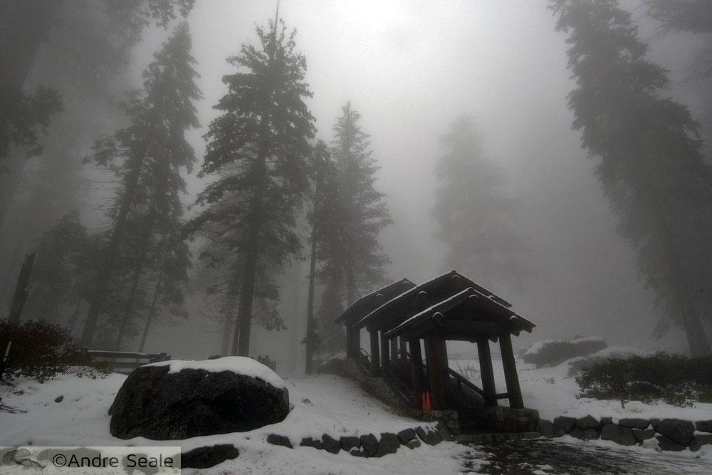 Fog no Parque das Sequóias - EUA - Dia internacional da Fotografia - do daguerreotipo à criatividade