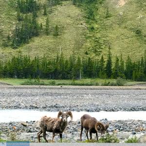 Quem vai defender o Alaska?