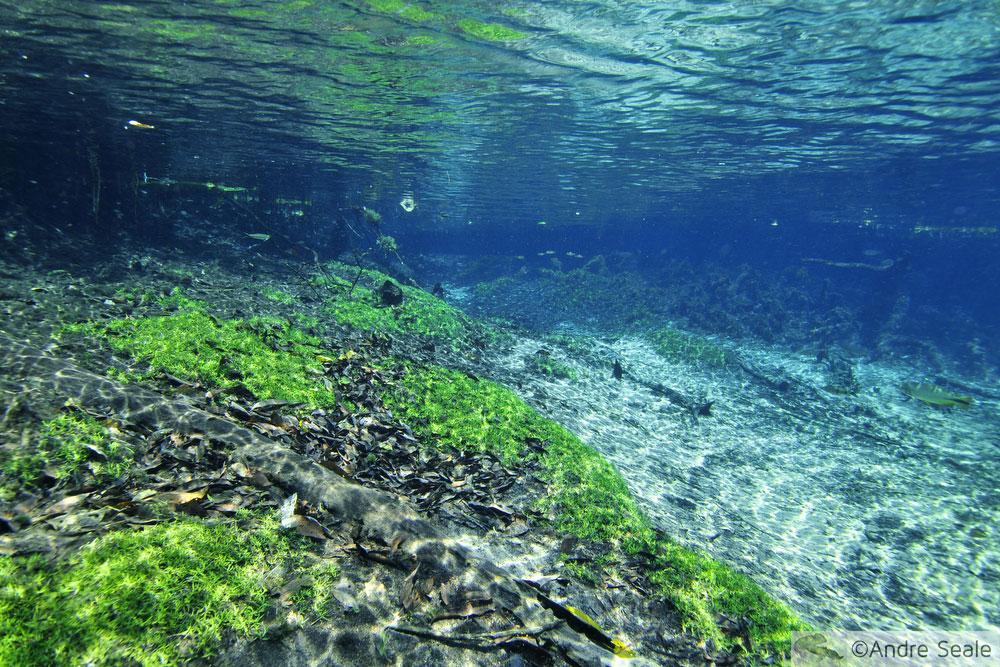 O rio da Prata é ouro - flutuação no rio da Prata e no rio Olho D'Água - em Bonito