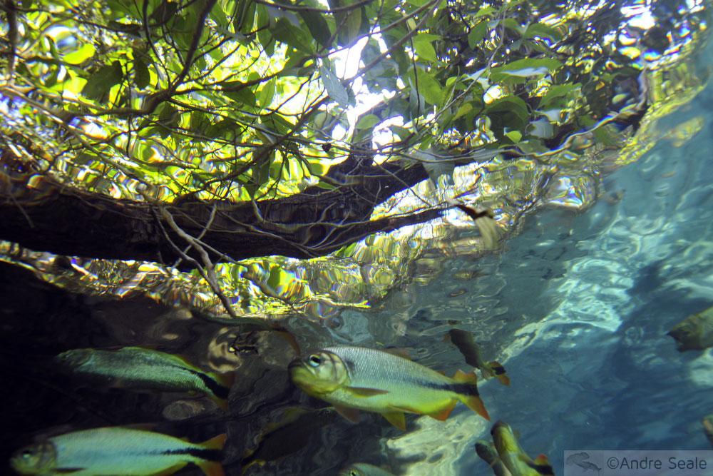 Peixe no Rio da Prata - Bonito MS