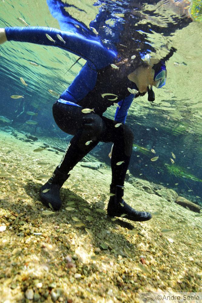 Flutuação no rio da Prata - snorkeler em Bonito - Mato Grosso do Sul