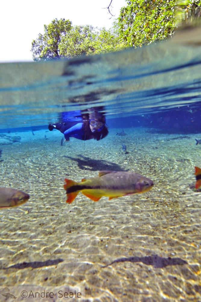 Ecoturismo - Flutuação no rio da Prata - Bonito