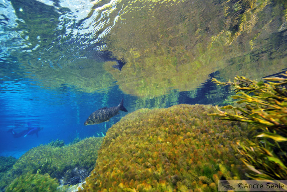 Flutuação no Rio Sucuri - peixes e paisagens submersas