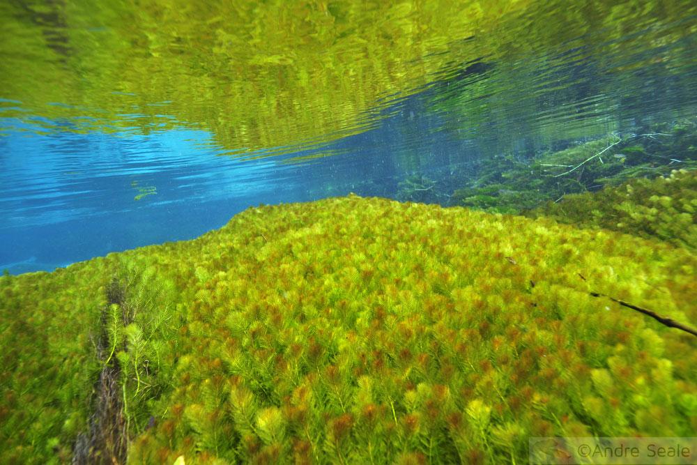 Flutuação no Rio Sucuri - vegetação - Bonito