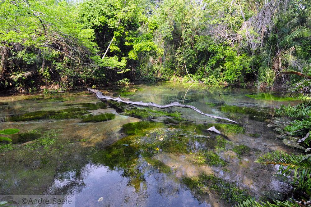 Rio Sucuri - nascente