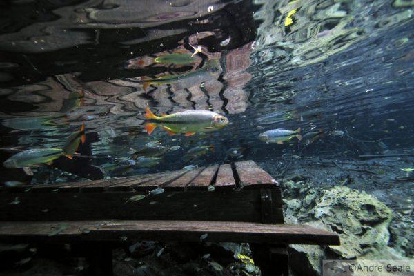 Aquário Natural - Bonito MS