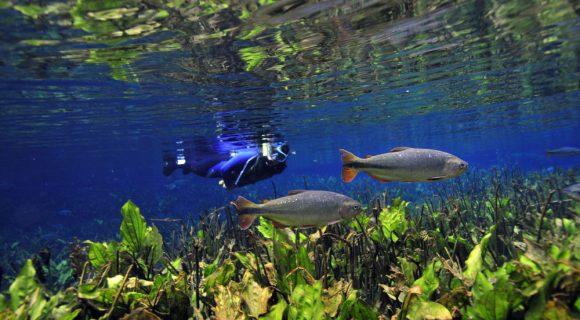Misterioso azul do Aquário Natural