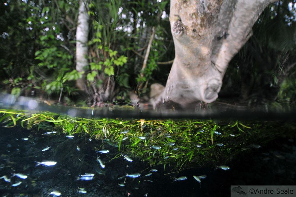 Flutuação no Aquário Natural - alevinos