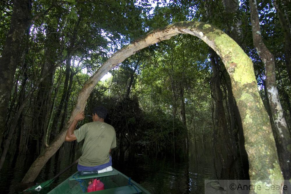 Mateiro - trilha no igarapé - Amazonas