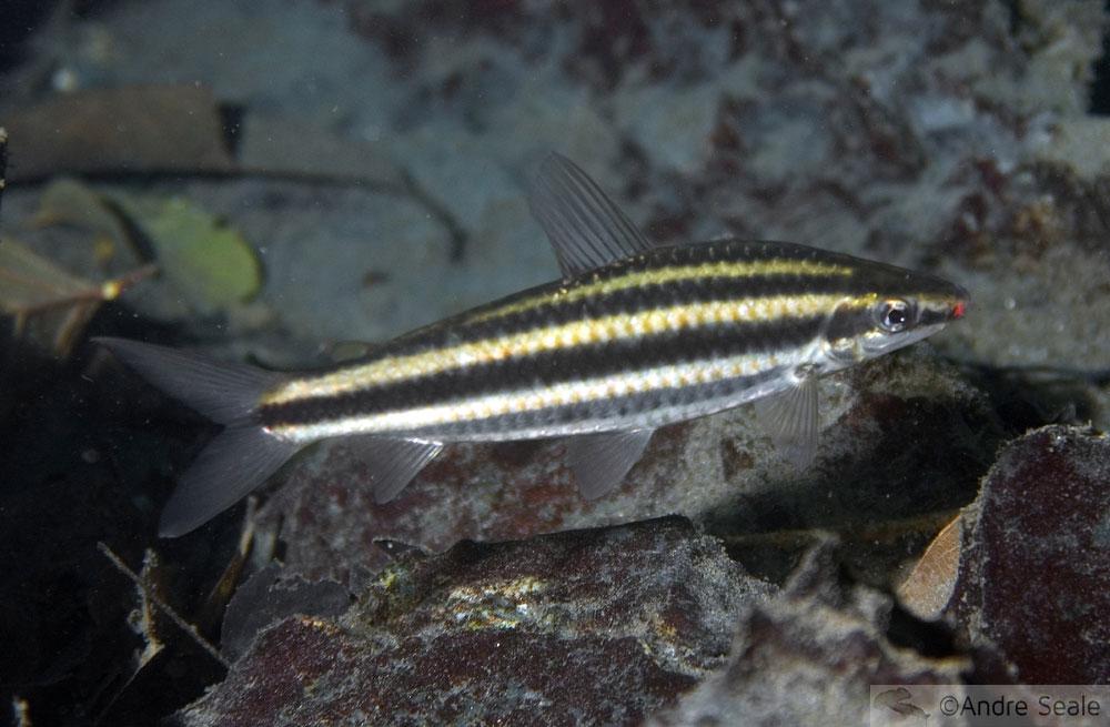 Fauna rio da prata - Bonito MS