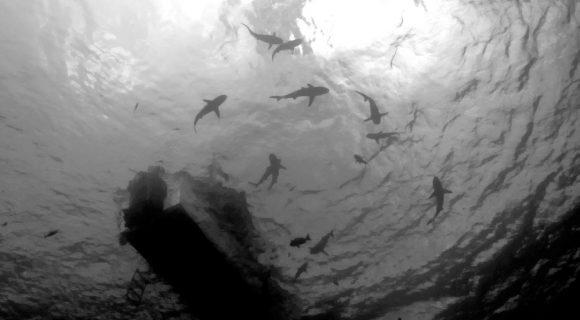 Sexta Sub: cercado por tubarões