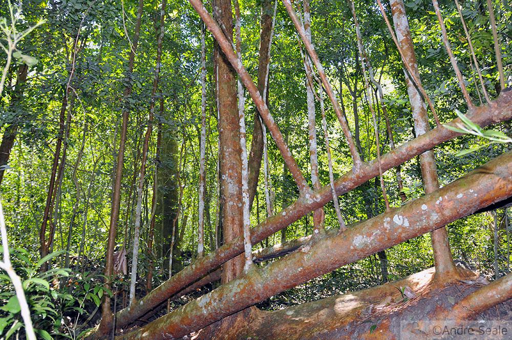 Gastronomia Mimosa de fazenda - trilhas