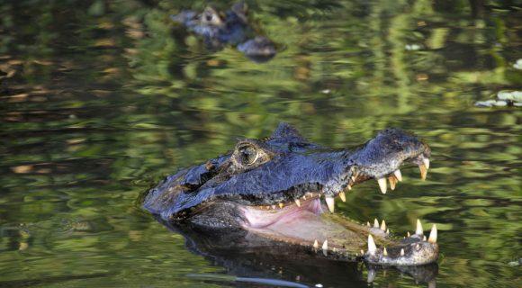 No Pantanal Sul