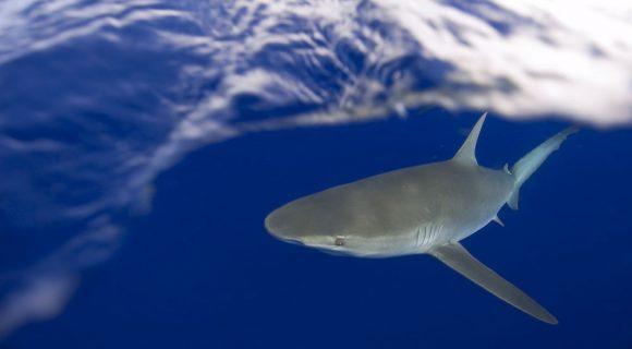 Sexta Sub: Tubarão no portfólio