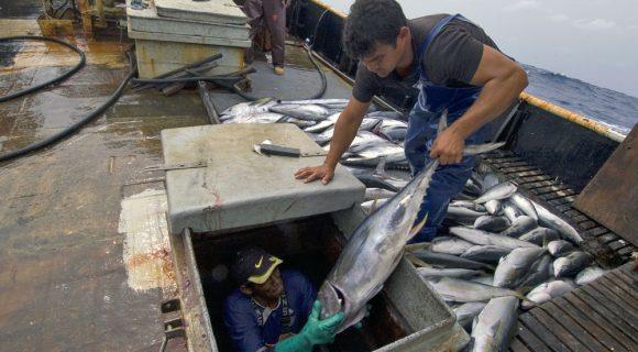 A realidade da pesca no Brasil