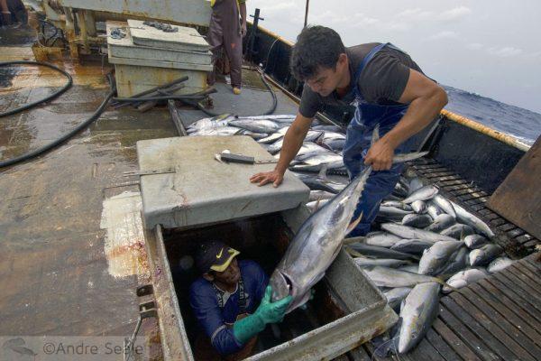 Realidade da Pesca no Brasil
