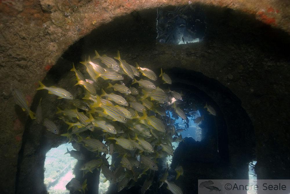 Naufrágio do Portinho - mergulho em Fernando de Noronha
