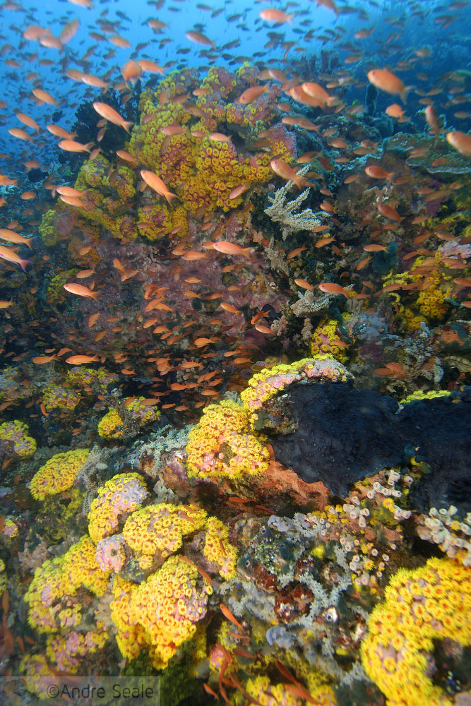 Top 10 points de mergulho no mundo - Pinacle Reef