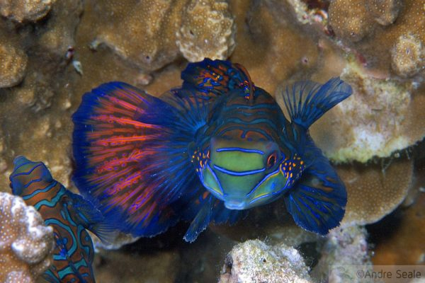 Top 10 points de mergulho no mundo - Malapascua