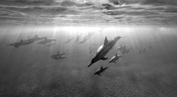 Sexta Sub: chuva de golfinhos