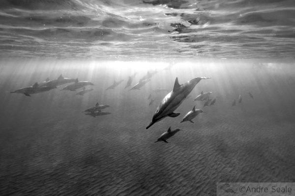 Chuva de golfinhos - Asferico 2009 ©Andre Seale