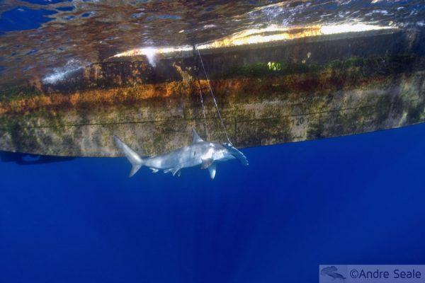 Our World Underwater 2009