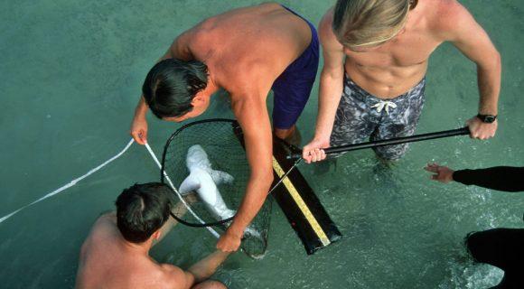 Resposta do desafio malla: para controlar um tubarão…