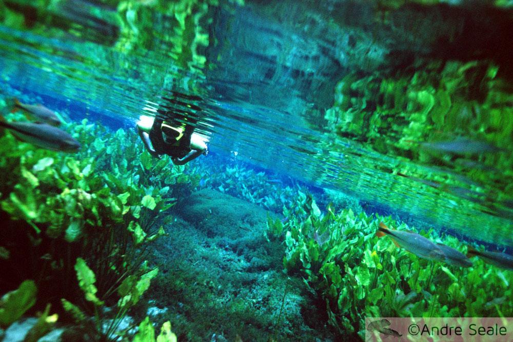 Sogro - Aquário Natural de Bonito