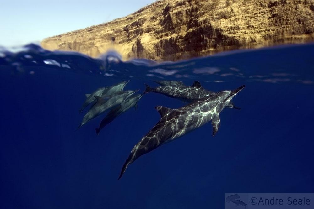 Melhores praias do Havaí - golfinhos de Kealakekua