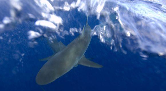 Sexta Sub: defendendo os tubarões