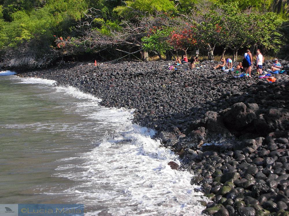 Praia da Baía de Kealakekua - Big Island