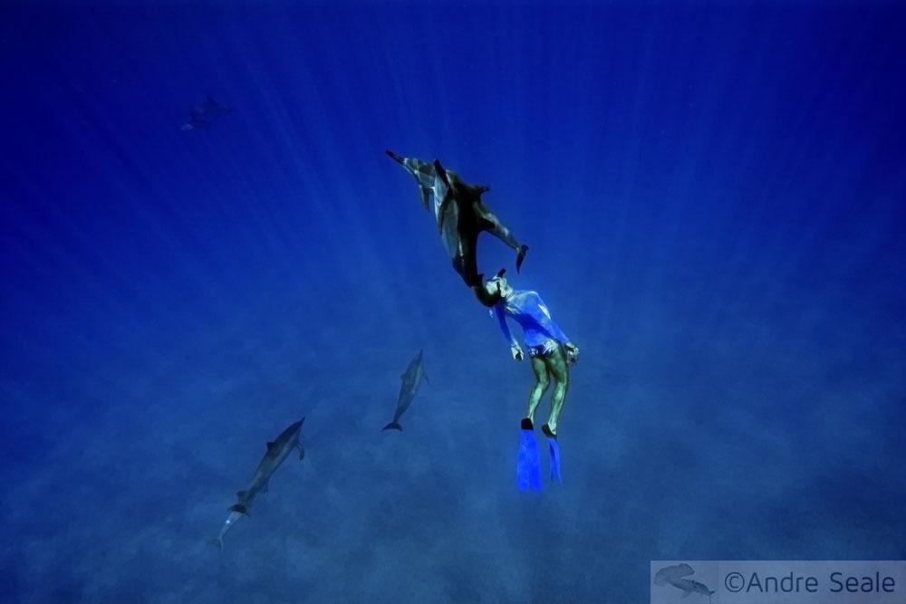 Baía de Kealakekua - snorkel com golfinhos