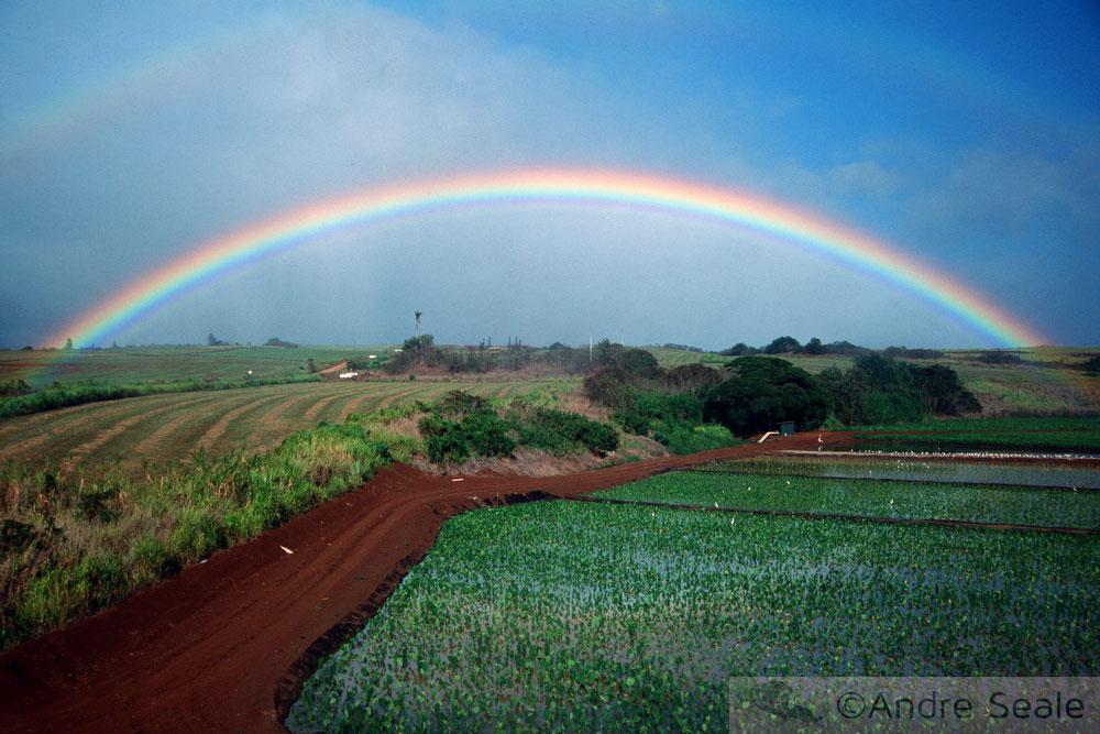 Arco-íris em plantação de abacaxi - caminhos havaianos
