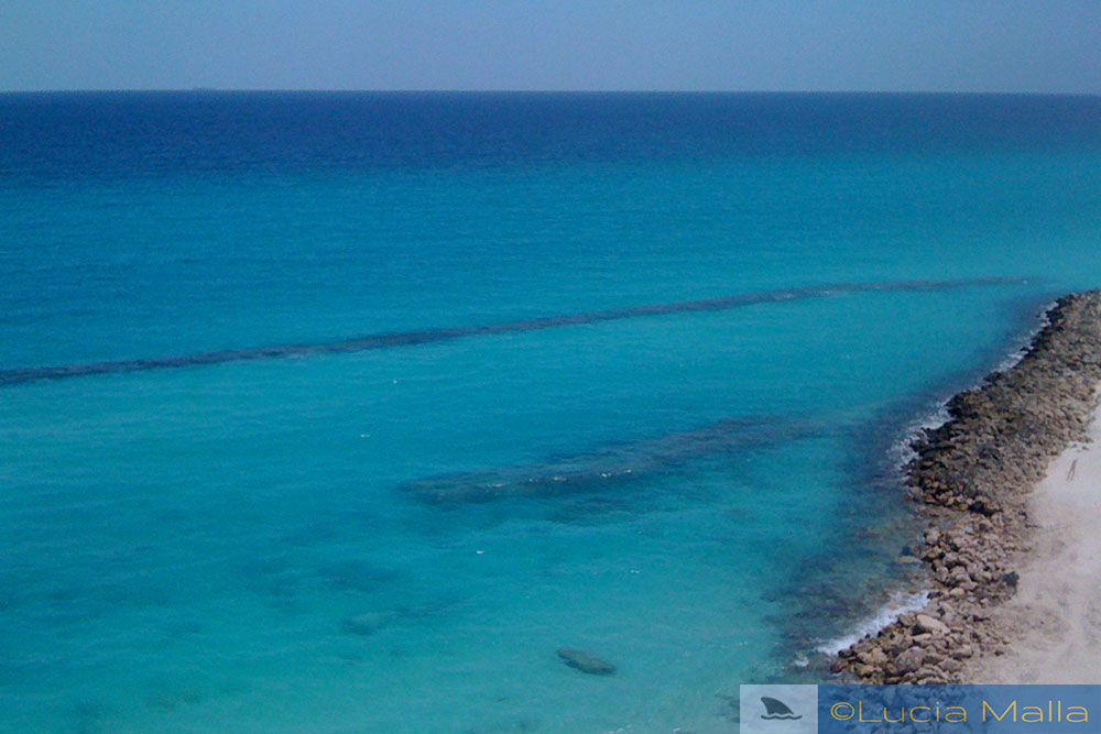 Cancun cai na rede