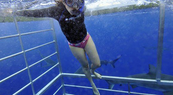 Sexta Sub: mergulho na gaiola para ver tubarões no Havaí
