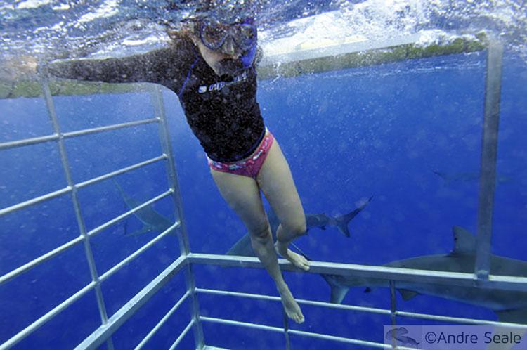 Sexta Sub - Na gaiola - mergulho com tubarões em Oahu no Havaí