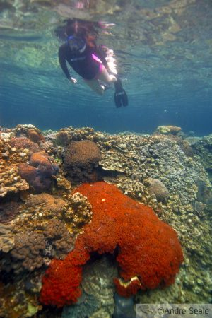 Snorkelando em Palau