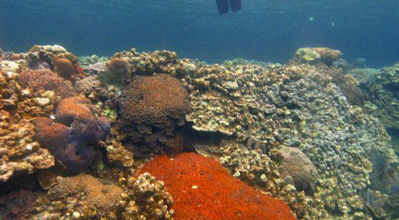 Sexta Sub: snorkelando em Palau