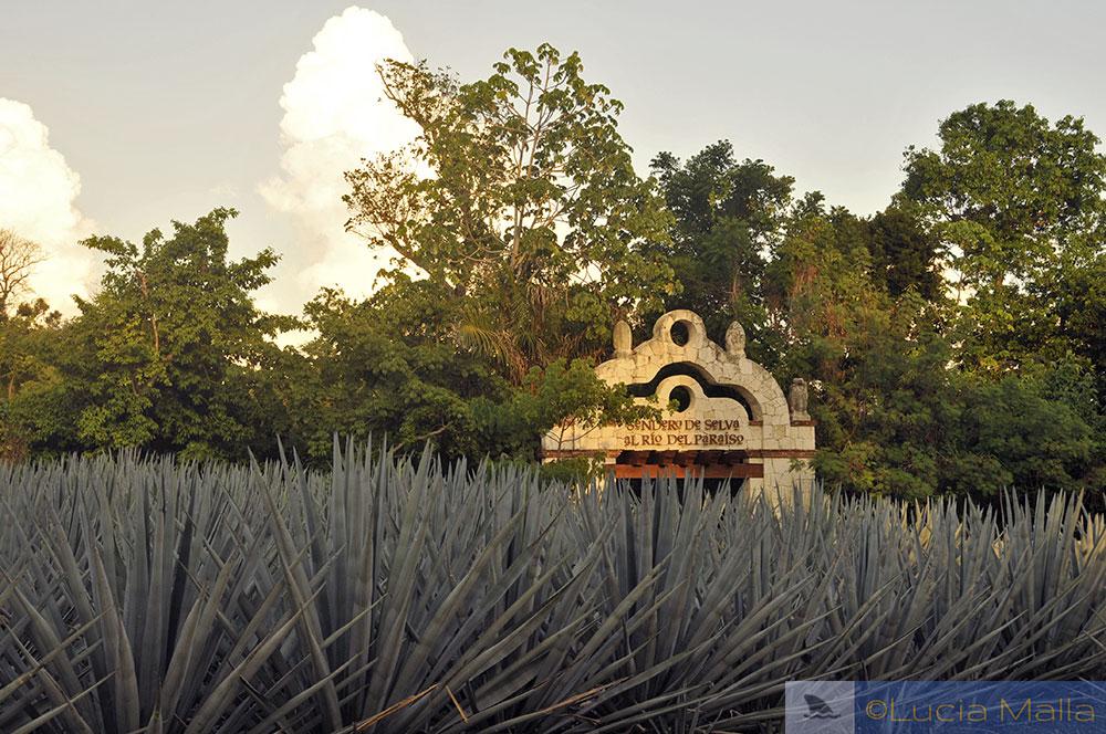 Jardim de agave - México