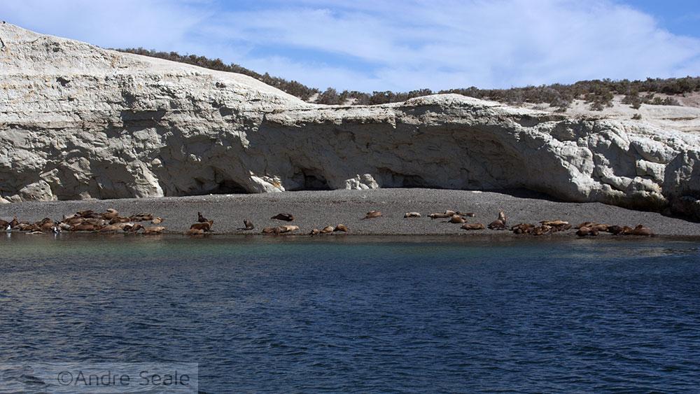 Punta Loma - Patagônia