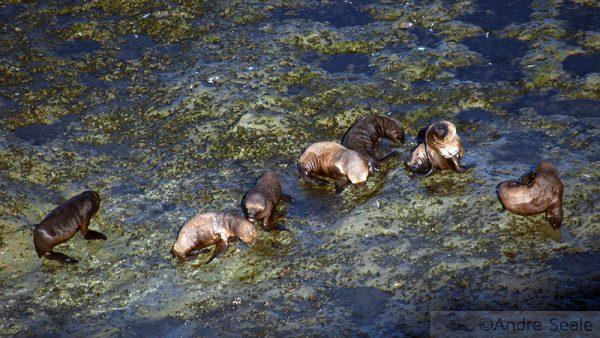 Mergulho com os leões marinhos na Patagônia argentina