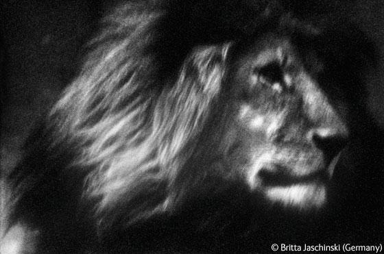 Wildlife Photographer of the Year 2009 - Minhas fotos prediletas - On the road