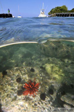 Baía de Keauhou