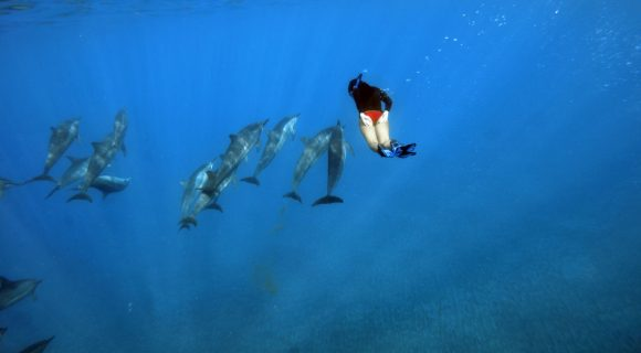Sexta Sub: entre os golfinhos – de novo