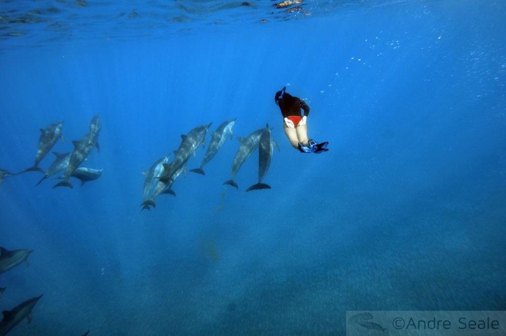 entre os golfinhos