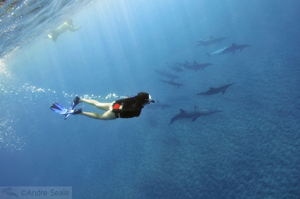 Grupo de golfinhos rotadores