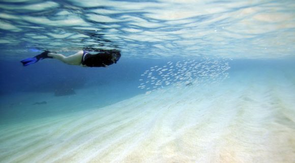 Sexta Sub: Waimea Bay