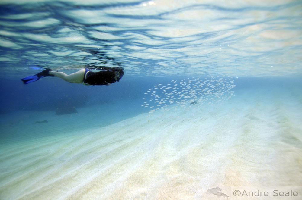Snorkel em Waimea Bay