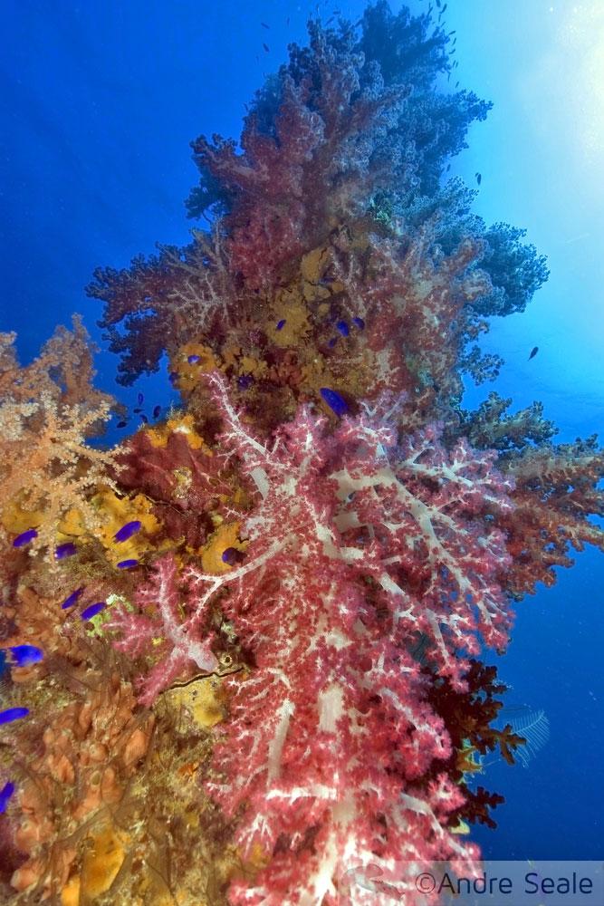 Foi Natal - recife de coral